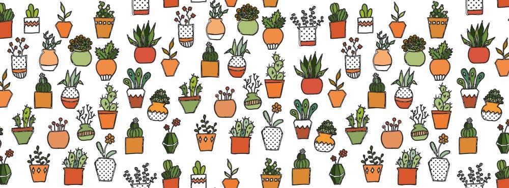 baner-cactus