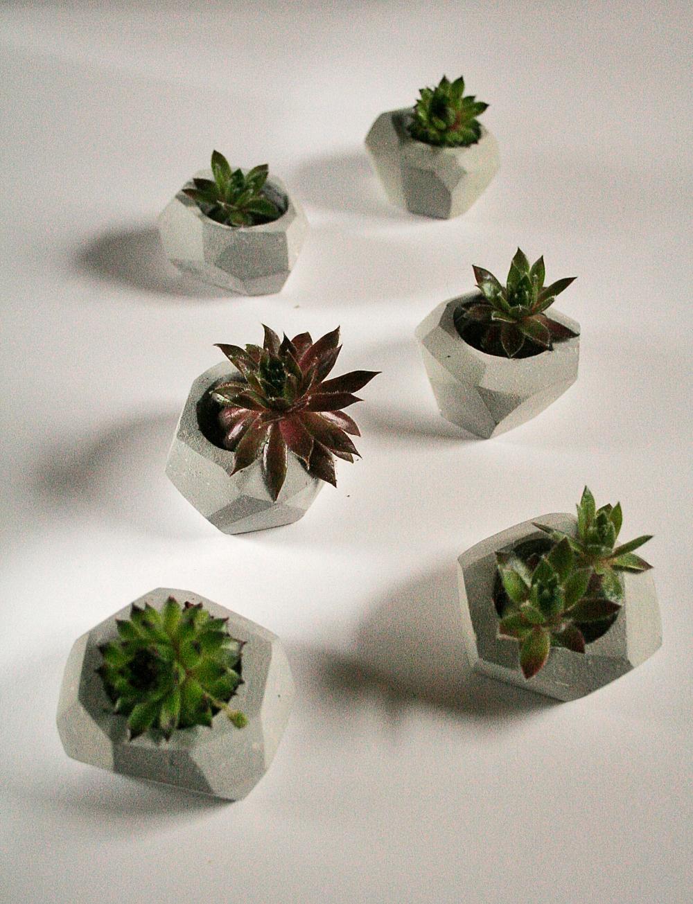 geo-plant
