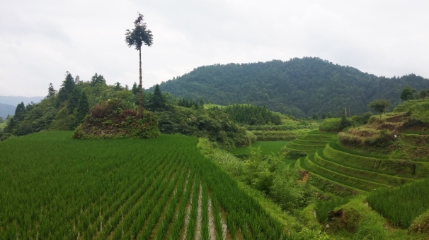 longji-rice-terrace-2