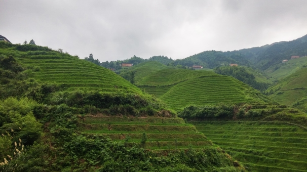 longji-rice-terrace-3