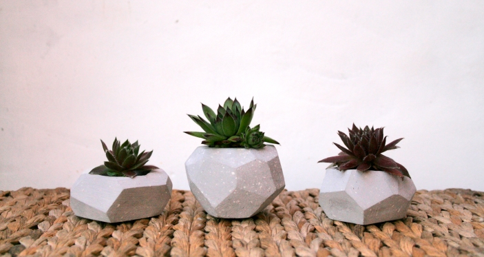 geo-plant-3
